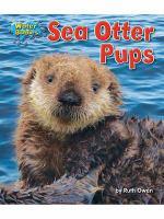 Sea Otter Pups