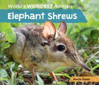 Elephant Shrews