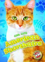 American Shorthairs