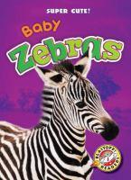 Baby Zebras