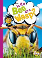 Is it a bee or a wasp?