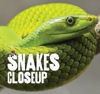 Snakes Closeup