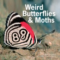 Weird Butterflies and Moths