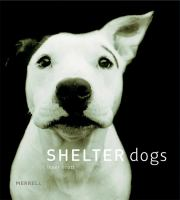 Image: Shelter Dogs