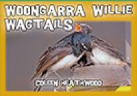 Woongarra Willie Wagtails