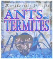 Ants and Termites