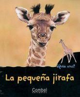 La pequeño jirafa