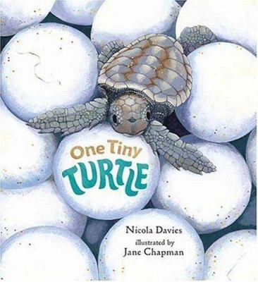 Cover image for One tiny turtle