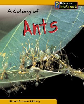 Cover image for A colony of ants