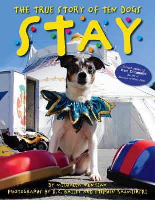 Cover image for Stay : the true story of ten dogs