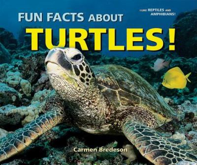 Cover image for Fun facts about turtles!