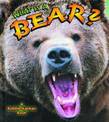 Cover image for What is a bear?