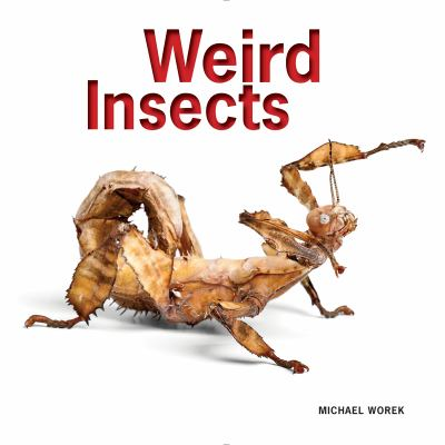 Cover image for Weird insects
