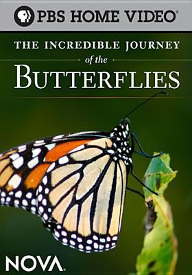 Cover image for The incredible journey of the butterflies