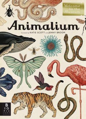 Cover image for Animalium