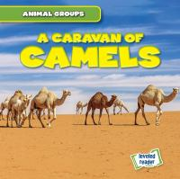 Cover image for A caravan of camels
