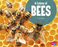 Cover image for A colony of bees