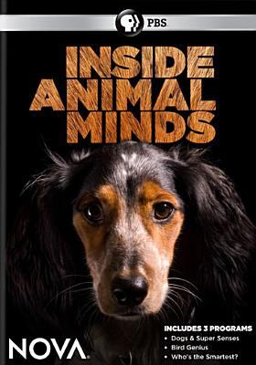 Cover image for Inside animal minds