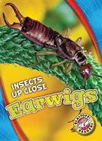 Cover image for Earwigs