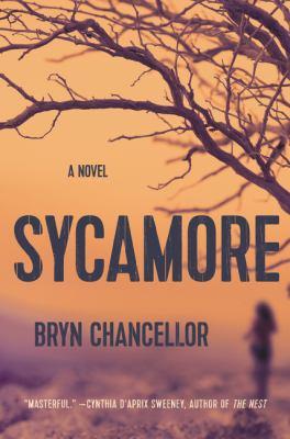 Sycamore :