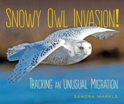 Snowy owl invasion! : tracking an unusual migration