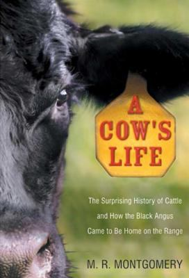 A cow's life: the surprising history of cattle and how the Black Angus came to be home on the range