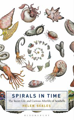 Spirals in time : the secret life and curious afterlife of seashells