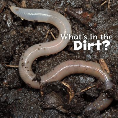 What's in the dirt?