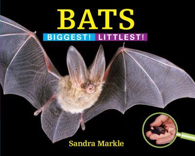 Bats :  biggest! littlest!